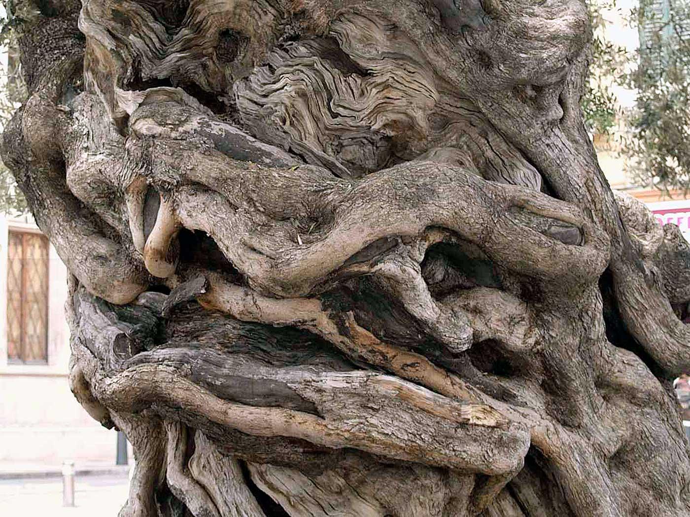 verwunschener Baumstamm
